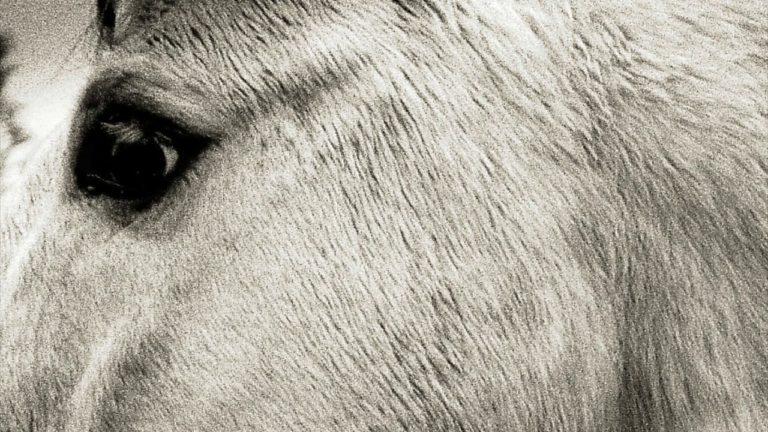Bonny Light Horseman – Deep in Love (2020)